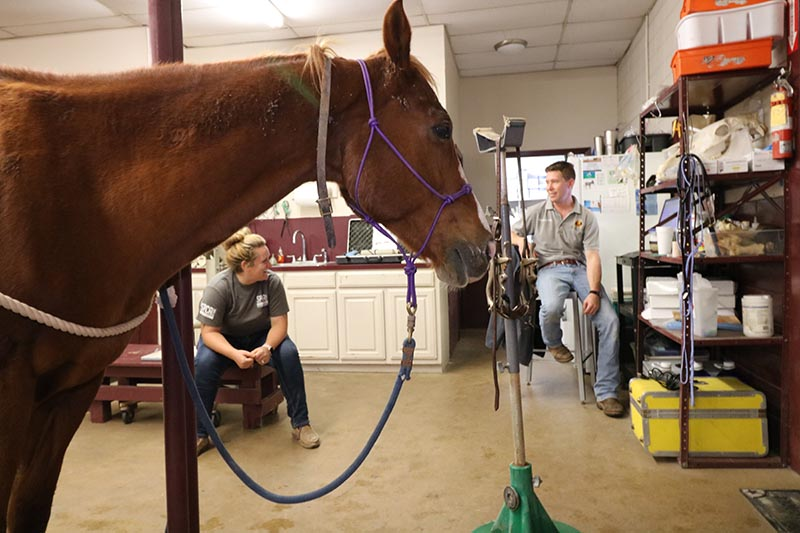 allen animal clinic, dr norton with horse