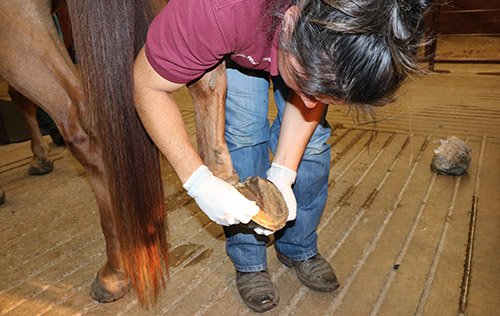 allen animal clinic, dr byron norton, equine dentistry, horse teeth, allen texas, collin county large animal clinic